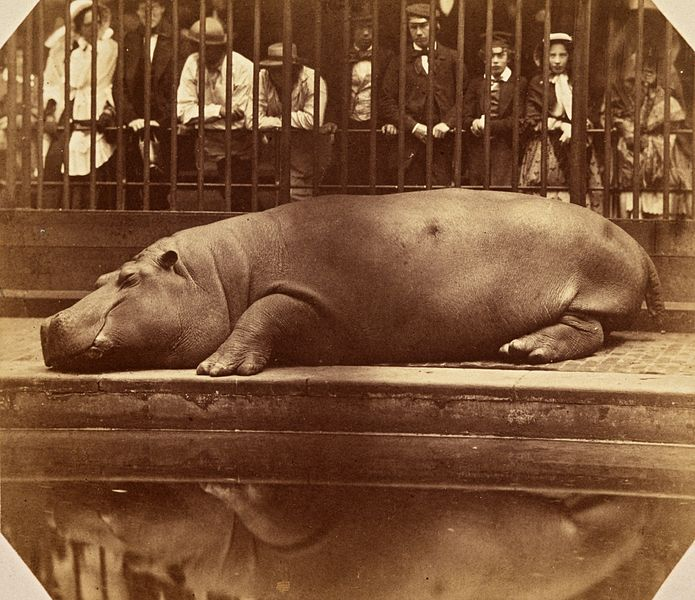 https://commons.wikimedia.org/wiki/File:The_Hippopotamus_at_the_Regents_Park_Zoo,_ca._1855.jpg