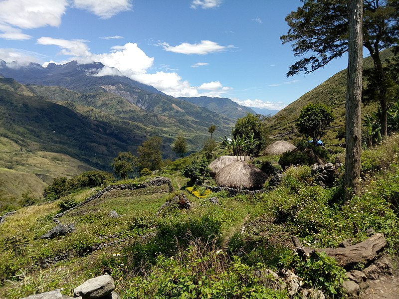 https://commons.wikimedia.org/wiki/File:20170903_Papouasie_Baliem_valley_14.jpg